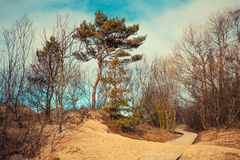 Sandy dune with trees Stock Image