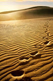Sandy dunes Royalty Free Stock Photography