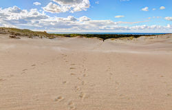 Sandy dunes during sunset. Curonian Spit, Lithuania Royalty Free Stock Photo