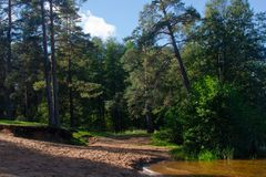 Sandy edge in the pine forest near the lake stock photo