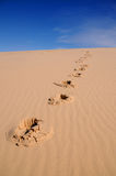 Sandy Footprints. Footprints in the sand dunes Royalty Free Stock Image
