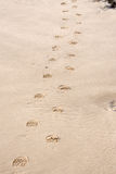 Sandy Footprints. On a beach lead into the distance Royalty Free Stock Image