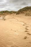 Sandy footsteps Stock Photography