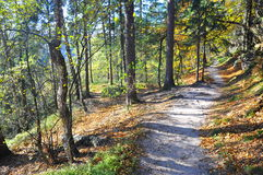 Sandy forest path in fall Royalty Free Stock Image