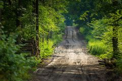Sandy forest road at summer Stock Photos