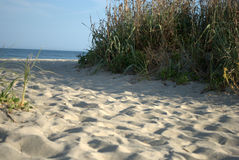 Sandy-Gehweg entlang den Strandgräsern Lizenzfreies Stockfoto