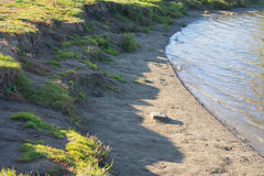 Sandy grassy shore of the lake Royalty Free Stock Photos