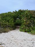 Sandy Hiking Trail Leading Into Green Thicket. Sandy hiking trail on beach leads into thick green shrubs and bushes with natural arch royalty free stock images