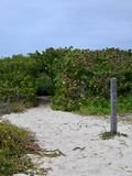 Sandy Hiking Trail Leading Into Green Thicket. Sandy hiking trail on beach leads into thick green shrubs and bushes royalty free stock photography