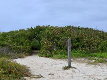 Sandy Hiking Trail Leading Into Green Thicket. Sandy hiking trail on beach leads into thick green shrubs and bushes stock photography