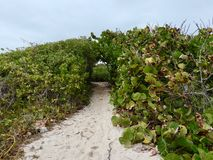 Sandy Hiking Trail Leading Into Green Thicket. Sandy hiking trail on beach leads into thick green shrubs and bushes with natural arch royalty free stock photography
