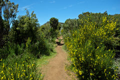 Sandy hiking trail in the mountains of Madeira Royalty Free Stock Photo