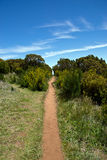 Sandy hiking trail in the mountains of Madeira Royalty Free Stock Photos