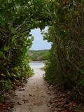 Sandy Hiking Trail Under Arch at Beach. A sandy hiking trail passes under a natural plant arch and leads to beach lagoon on Grand-Terre, Guadeloupe, in the stock image