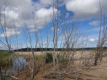 Sandy island. Old willows on the sandy island Royalty Free Stock Photography