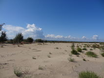 Sandy island. On the river, overgrown with a gadget and tumbleweed Stock Photography