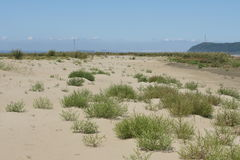 Sandy island. On the river, overgrown with a gadget and tumbleweed Royalty Free Stock Image