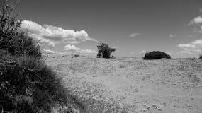 Sandy meadow Stock Photo