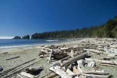 Sandy pacific beach. Fog is coming from the open pacific ocean on the beach and into the boreal rainforests of the west coast of vancouver island Royalty Free Stock Photo