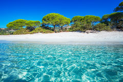 Sandy Palombaggia beach with pine trees and azure clear water, C Stock Image