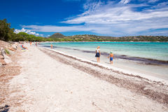 Sandy Palombaggia beach with pine trees and azure clear water on Corsica Royalty Free Stock Photo