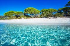 Sandy Palombaggia-strand met pijnboombomen en azuurblauw duidelijk water, C stock afbeelding
