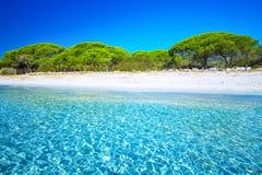 Sandy Palombaggia-strand met pijnboombomen en azuurblauw duidelijk water, C royalty-vrije stock afbeelding