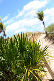 Sandy path on beach Royalty Free Stock Images