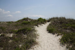 Sandy path through bushes and vegetation Stock Photos