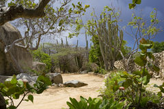 Sandy path with dark sky in the back. Lined with cactus plants Royalty Free Stock Images