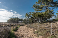 Sandy path in the forest. In Bretignolles-sur-mer France Stock Images