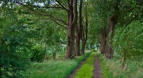 A sandy path between old beech trees Stock Photos