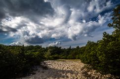 Sandy path with pine trees on Hel peninsula, Poland royalty free stock photos