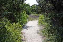 Sandy path to beach through bushes and grass Stock Image