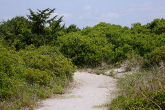 Sandy path to beach through bushes and grass Royalty Free Stock Photography