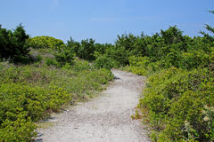 Sandy path to beach through bushes and grass Royalty Free Stock Image