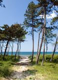 Sandy path to the sea. Sandy footpath leading to the ocean, cutting across sand dunes covered with trees stock photography