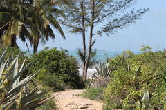 Sandy path to tropical beach. Scenic view of sandy path receding past palm trees with tropical beach and sea in background Royalty Free Stock Photo