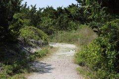 Sandy path through vegetation and dunes Stock Photos