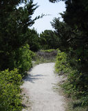 Sandy path through vegetation and dunes Royalty Free Stock Photo