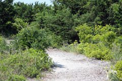 Sandy path through vegetation and dunes Stock Images