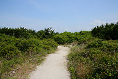 Sandy path through vegetation and dunes Royalty Free Stock Images
