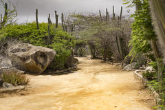 Sandy pathway with dark sky in the back. Lined with cactus plants Stock Photo