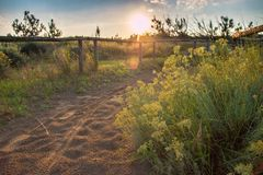 Sandy pathway with footprints and green plants. Royalty Free Stock Photography