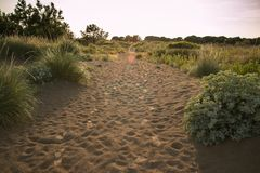 Sandy pathway with footprints and green plants. Royalty Free Stock Images