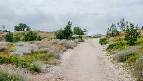 Sandy pathway Royalty Free Stock Photography