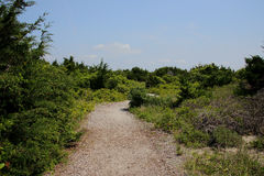 Sandy pathway through vegetation and dunes Royalty Free Stock Photography
