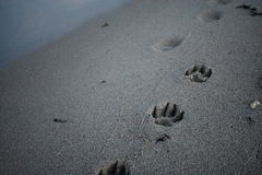 Sandy paws Royalty Free Stock Photography