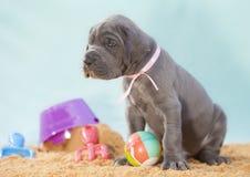 Sandy puppy Stock Photos