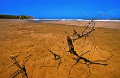 Sandy Red Beach with Branch (HDR) Royalty Free Stock Photo